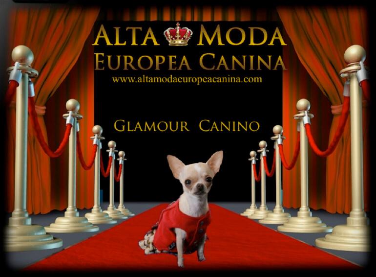 concurso-fotografico-moda-canina