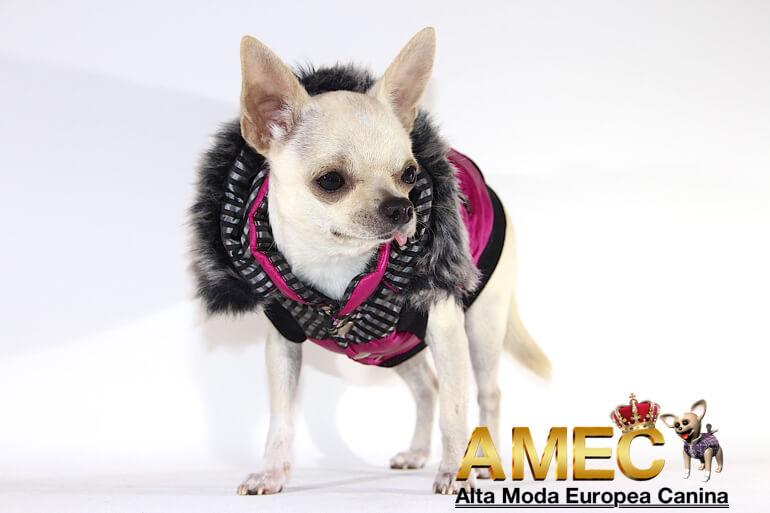 abrigos-disenados-para-perros