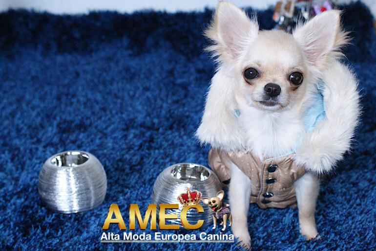 promociones-caninas