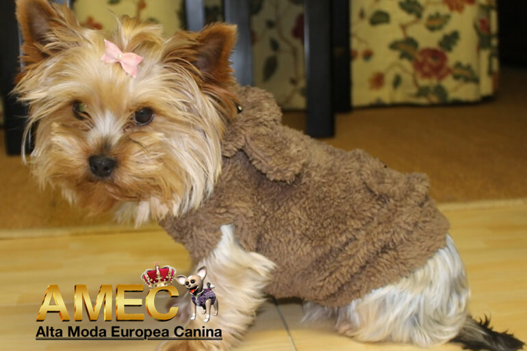 jerseis-capucha-perros-yorkshire