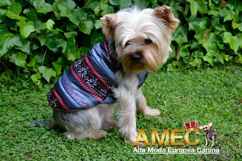 moda-canina-para-yorkshire-terrier
