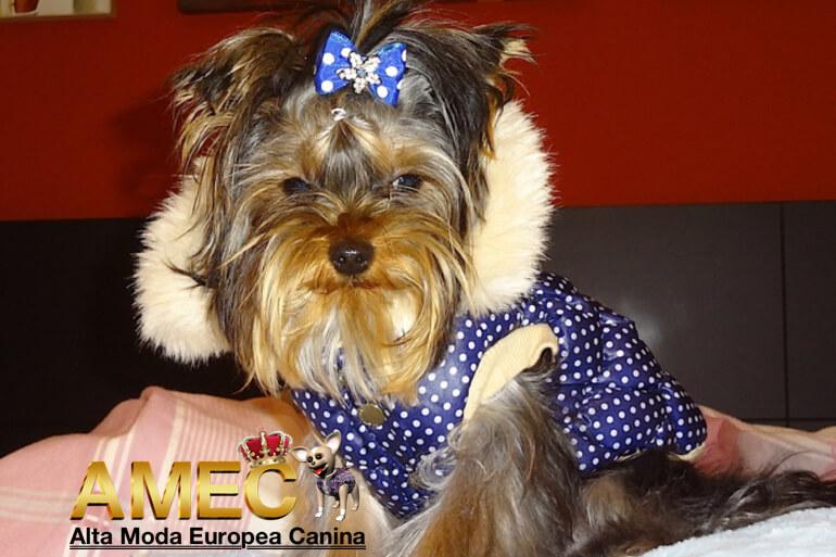 yorkshire-abrigo-lujo-perros