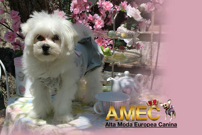 vestidos-pedreria-perros