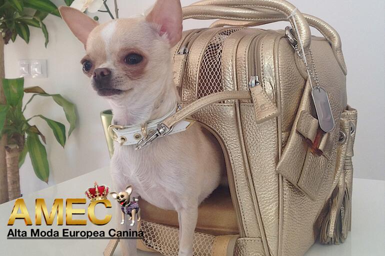 bolsos-caninos