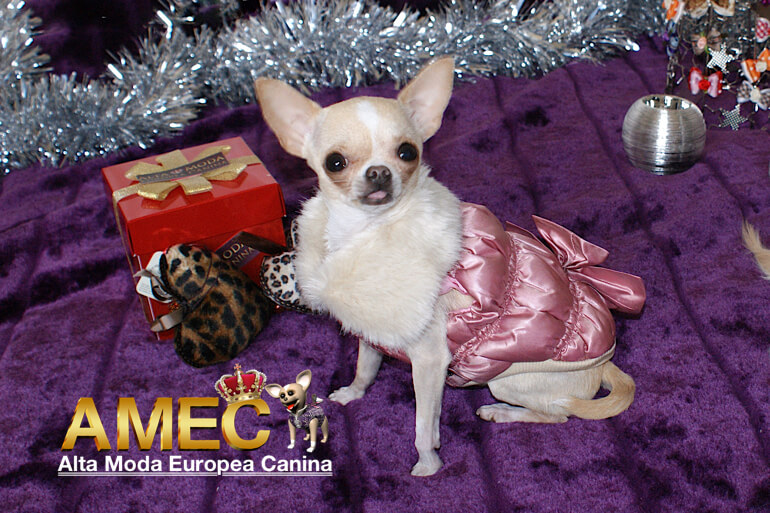 moda-canina-en-navidad