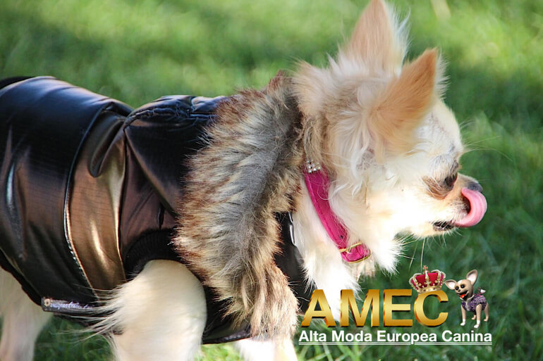 abrigos-baratos-para-perros