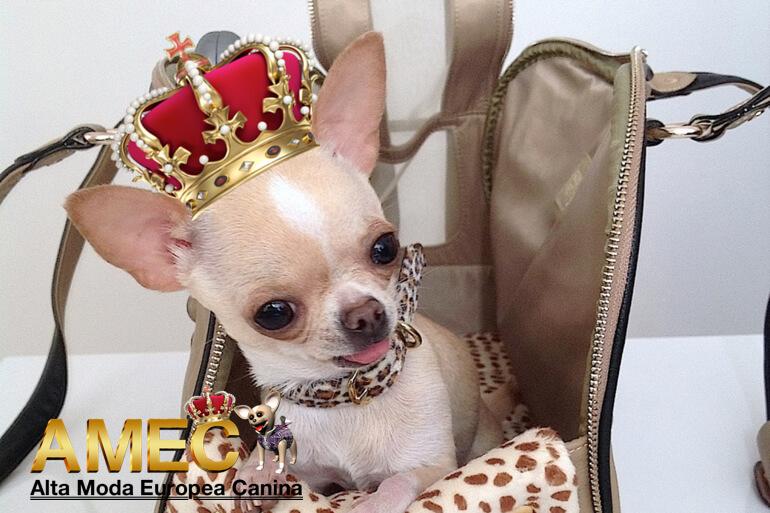 modelos-caninos-ropa-perros