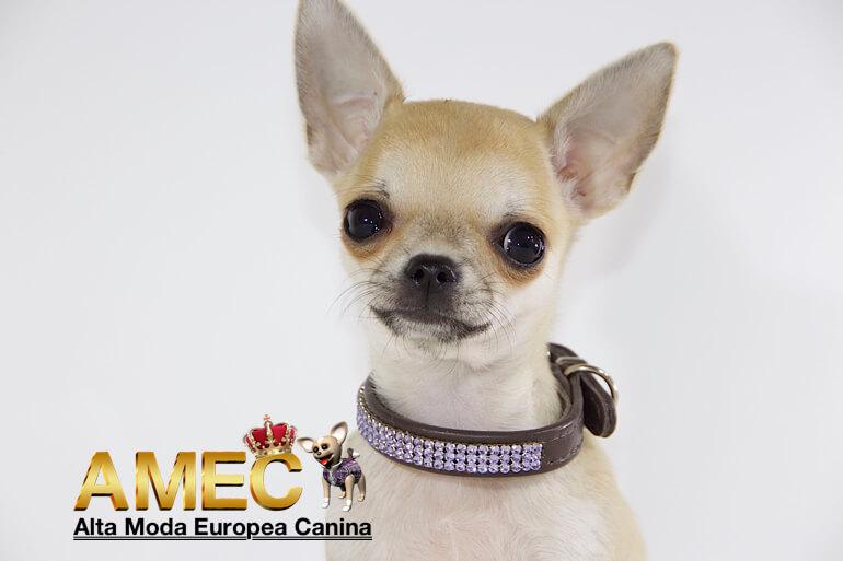 collares-swarovski-perros
