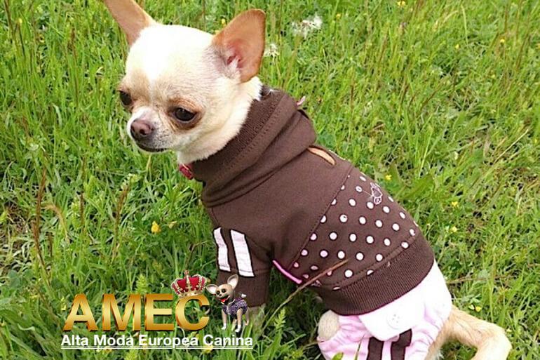moda-perros-blog