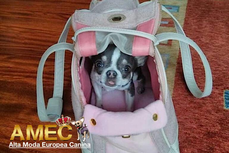 bolsos-perros-pequenos