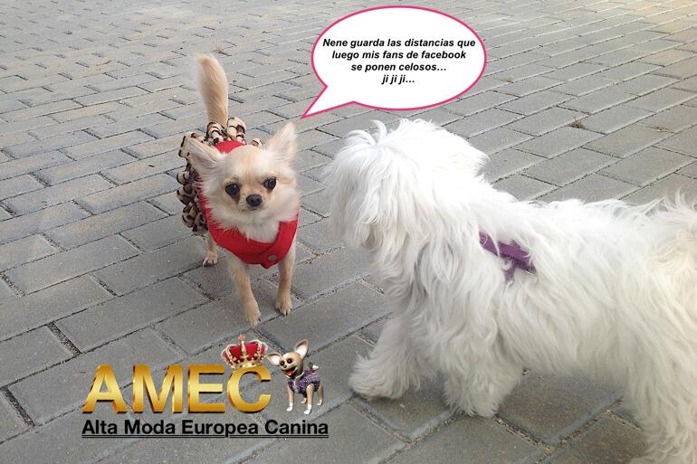 moda-perros
