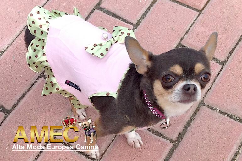 comprar-vestidos-perros