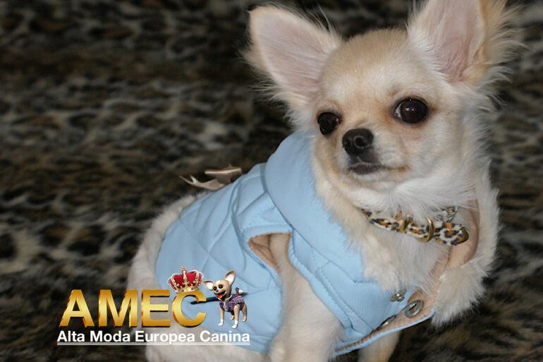 abrigo-azul-pastel-perros