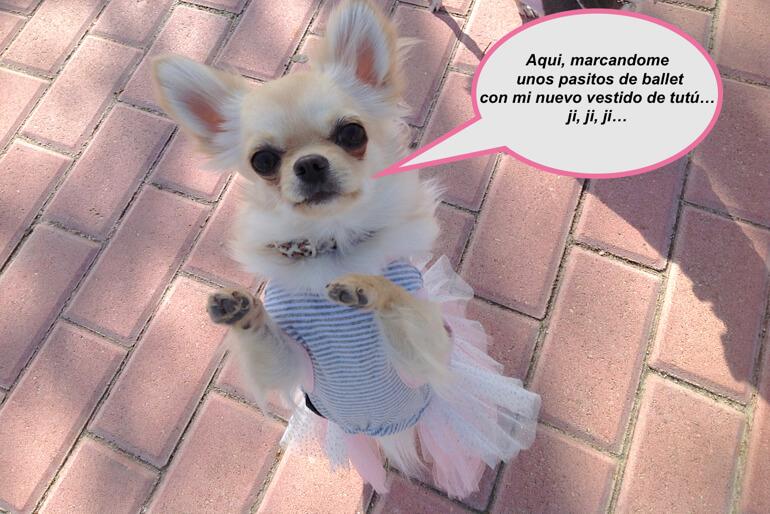moda-perros-fotos