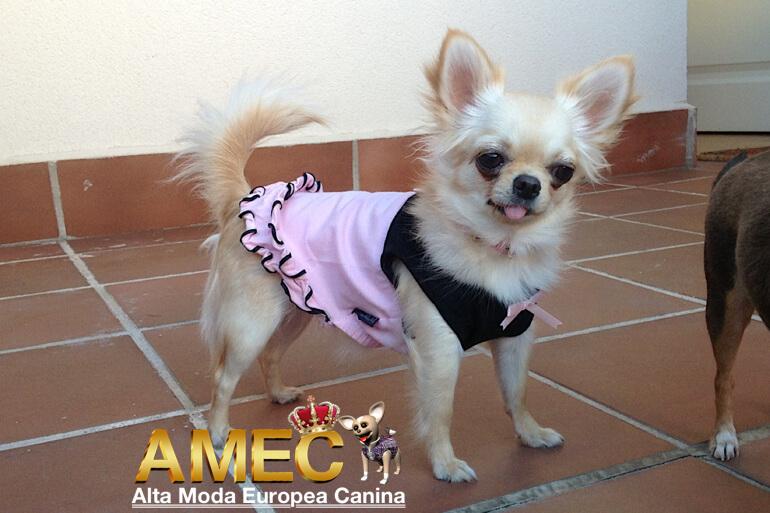 vestidos-baratos-perros