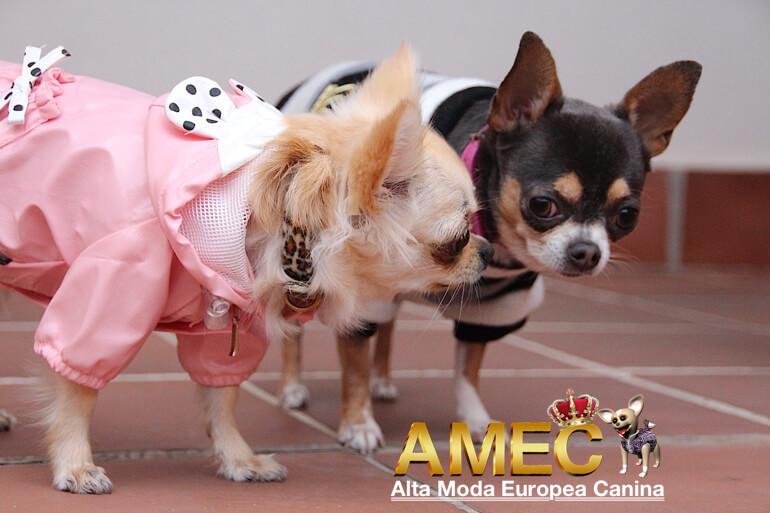 moda-canina-en-oferta