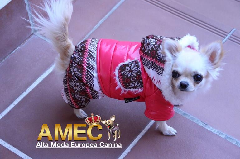 ofertas-abrigo-perros
