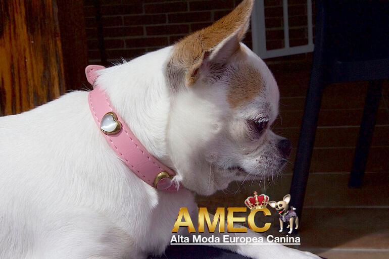 collar-exclusivo-perros