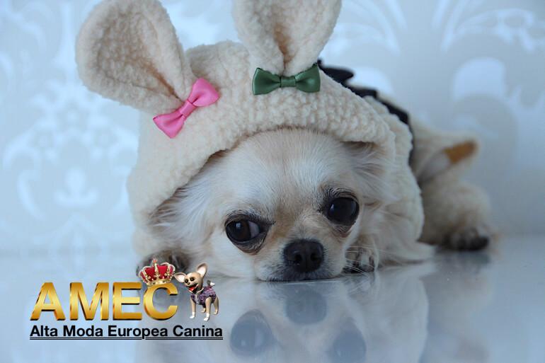 ropa-perros-carnavales