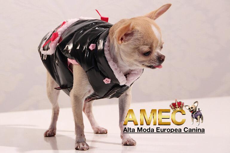 abrigos-lujo-perros