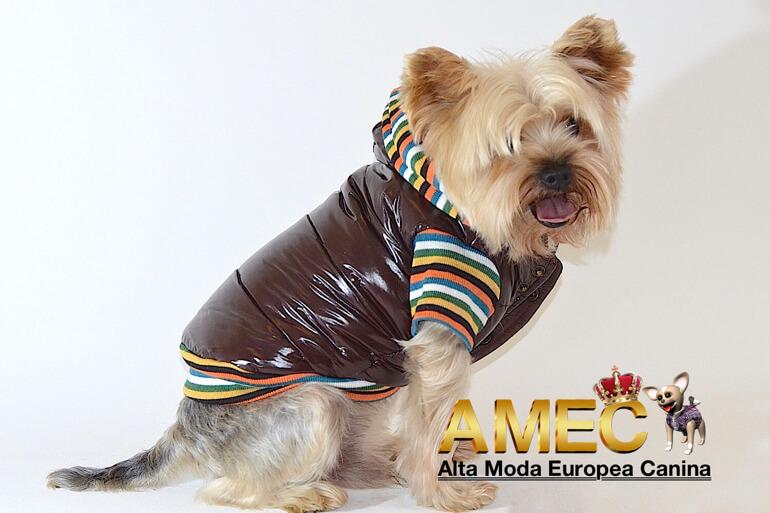 alta-moda-europea-canina