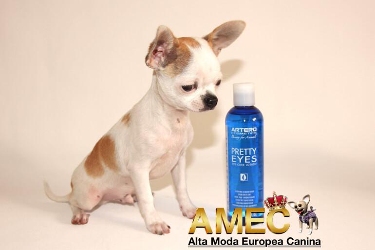 limpieza-del-lagrimal-en-perros