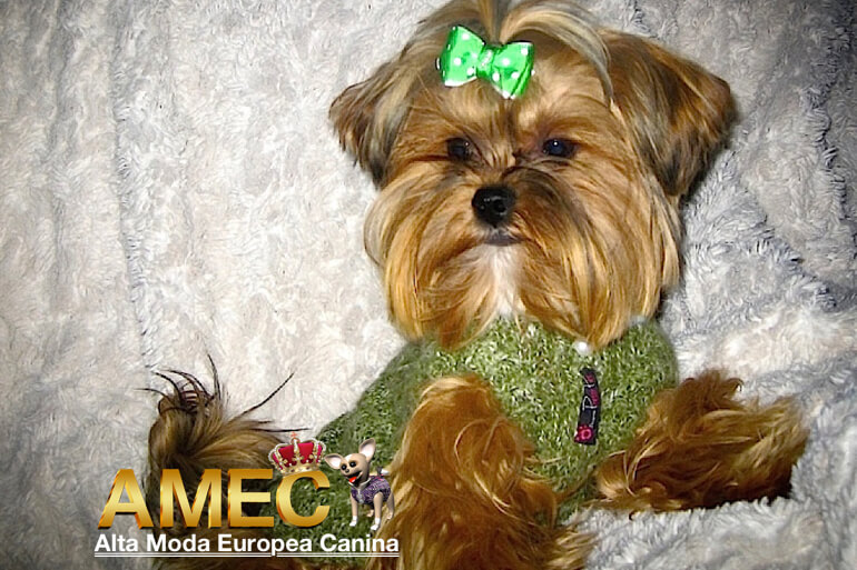 ropa-primavera-yorkshire-terrier