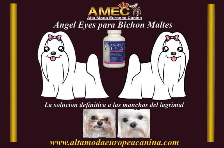 angel-eyes-perros