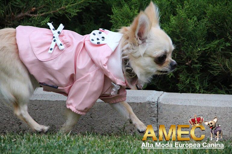 impermeables-para-perros-pequenos