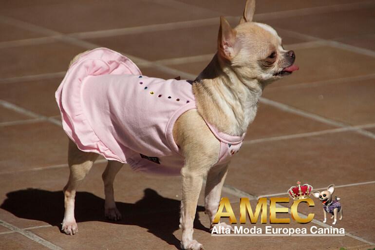 vestidos-primaverales-perros-hembra
