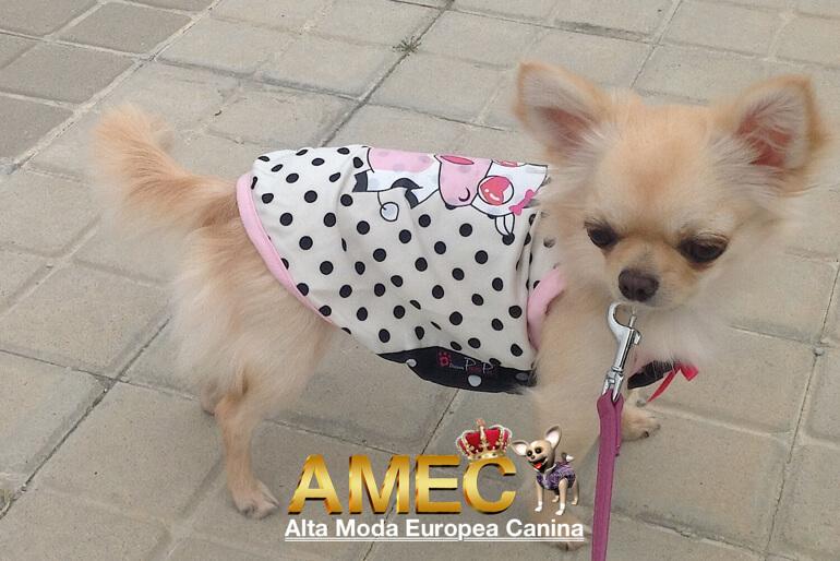camisetas-perros-pequenos