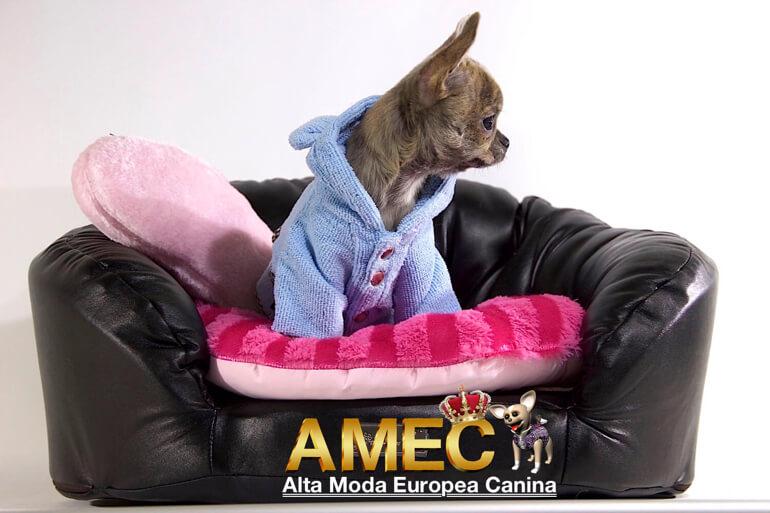 nueva-tienda-canina