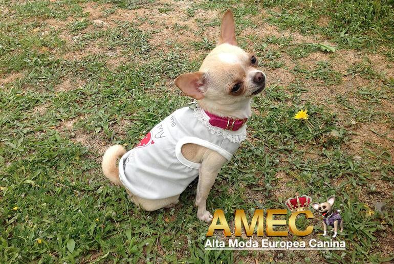 ropa-verano-perros
