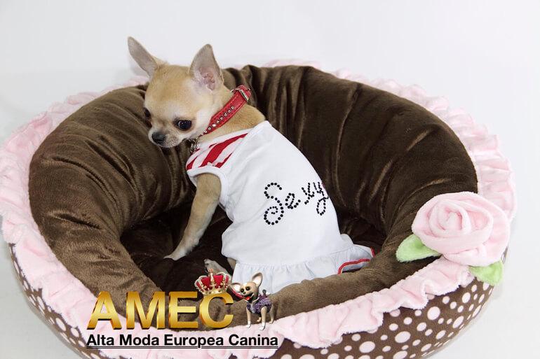 ceb2e03727f ROPA PARA PERROS. Tu tienda canina on line. | Alta Moda Europea Canina