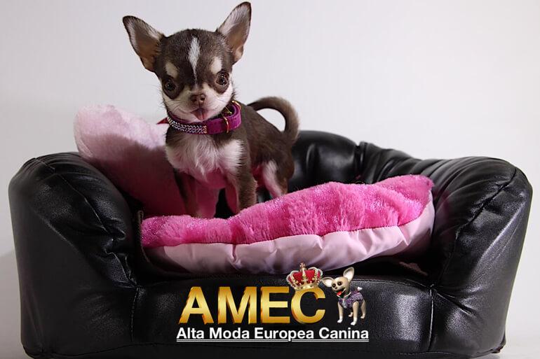 nuevas-camas-de-diseño-para-perros