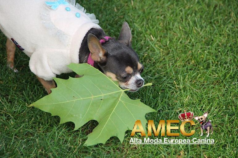 ropa-para-perros-en-otoño