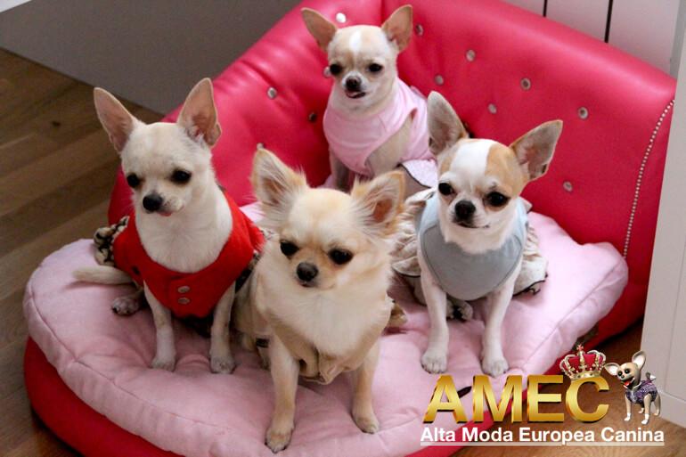 sofas-perros