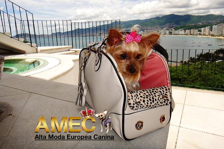 accesorios-caninos-online