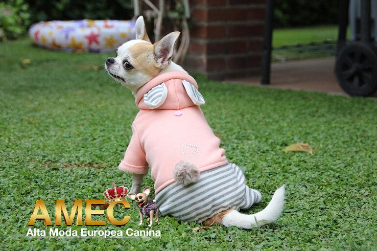 chandal-perros