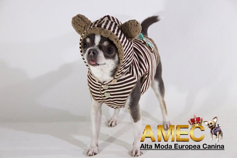 nueva-tienda-alta-moda-europea-canina
