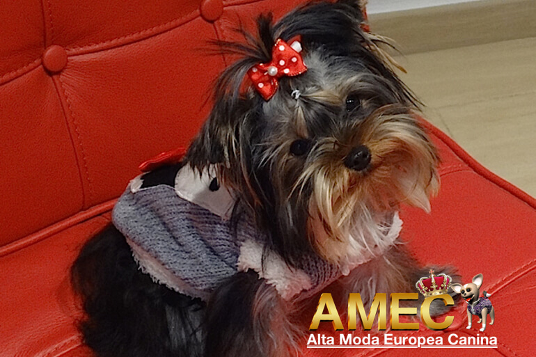ropa-para-yorkshire-terrier