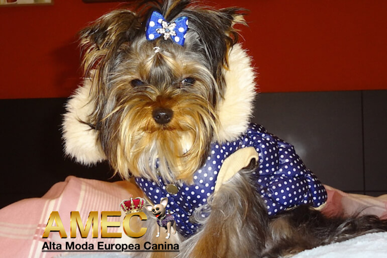 ropa-yorkshire-terrier