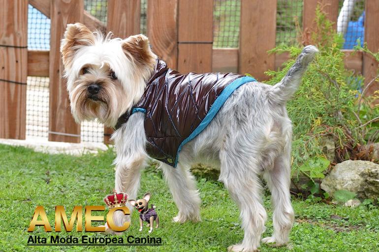 abrigos-perros-en-promocion