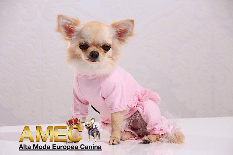 moda-canina-en-facebook