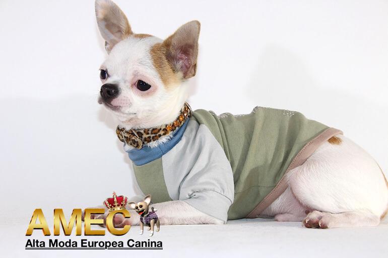 ropa-perros-camisetas