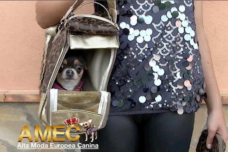 bolsos-para-perros