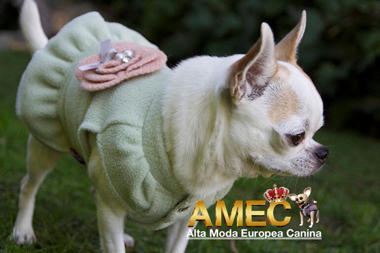 precio-moda-canina