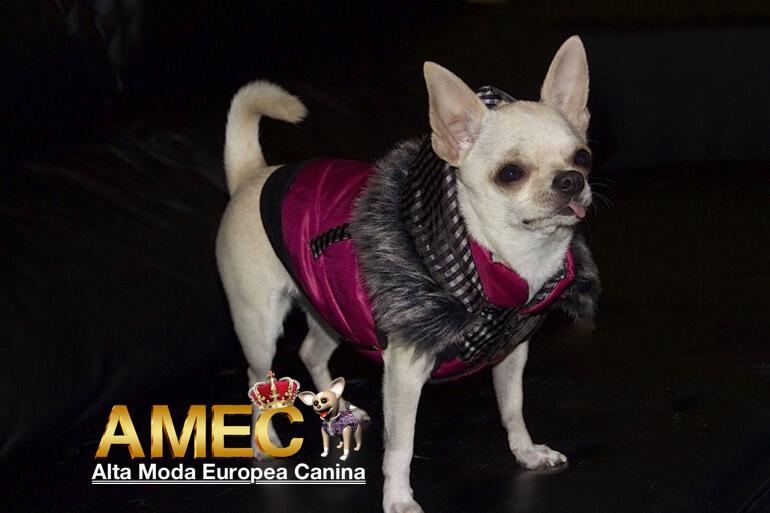 ropa-abrigo-perros