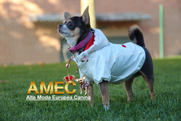 ropa-lluvia-perros