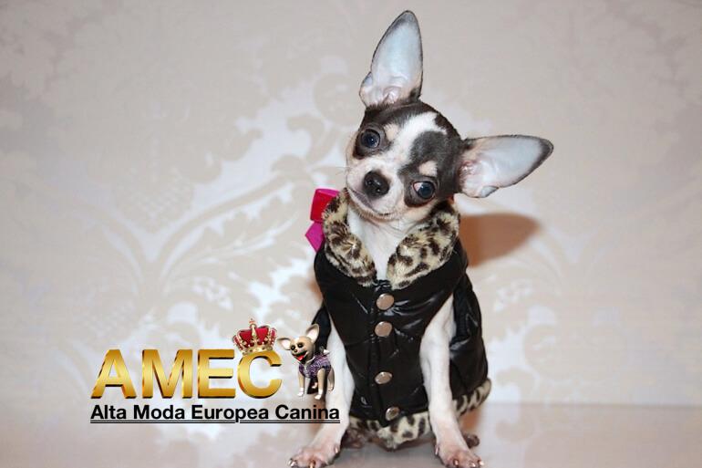 tallas-especiales-ropa-perros